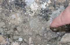 Sivas'ta Dünya tarihine ışık tutacak fosiller bulundu