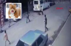 Adana'da hamile kediyi Pitbull'a parçalattılar twitter ayağa kalktı