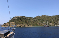 Marmaris Koca Ada'daki eşek esrarı! Tekneleri görünce anırıyordu