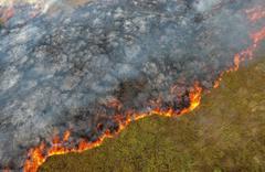 Sinop'ta ot yangını