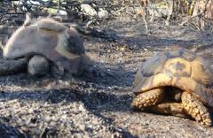 Çanakkale'deki korkutan orman yangını kontrol altına alındı