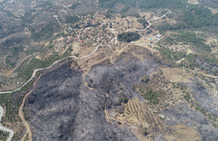 İzmir'de yanan ormanlar için 1 milyon fidan kampanyası başlatıldı