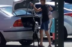 ABD'de bir kadın barınağa kabul edilmeyen köpeğini bagaja kilitledi