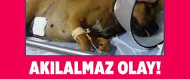 İstanbul Esenyurt'ta iş yerinin önündeki köpek pompalı tüfekle vuruldu