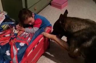Bu köpek anne eksikliğini hiç yaşatmıyor