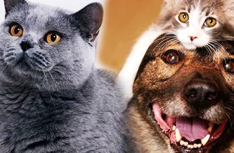 Kediler sandığınızdan daha akıllı olabilir en az insanlar kadar...