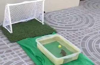 Penaltı atan balık