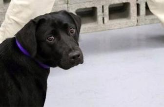 CIA bomba uzmanı köpeği kovdu!