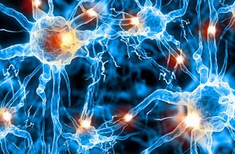 ABD'li bilim insanları canlı beyin hücresi modeli oluşturdu