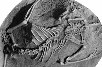 145 milyon yıllık fosil memelilerin en eski atası