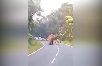Fil çekim yapan adamı böyle öldürdü!