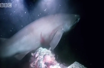 Köpekbalığı belgeselcilere saldırdı!