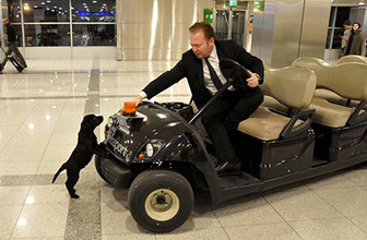 Havalimanı tuvaletinde unutulan yavru köpeğe personel sahip çıktı