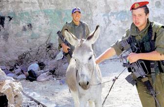 Sonunda bu da oldu! İsrail askerleri çiftçilerin eşeklerine göz koydu