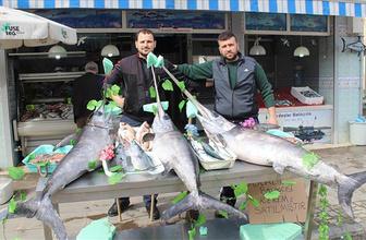 Ağlara takılan kılıç balıkları 5 bin liraya satıldı