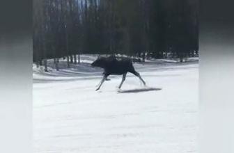 Kayakçılara geyik sürprizi!