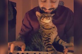 Müzik sevdalısı sevimli kedi!