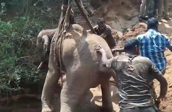 21 metrelik kuyuya düşen yavru fil vinçle kurtarıldı