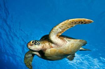Deniz kaplumbağasının midesinden çıkanlara bakın