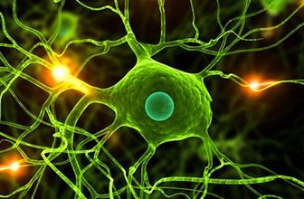 TÜBA'dan kök hücre ve embriyo eğitimi