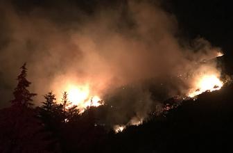 İzmir'de orman yangını 5 hektarlık alan kül oldu