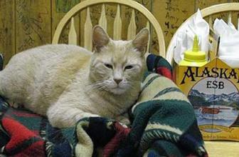 Belediye başkanı 'kedi' 20 yaşında öldü