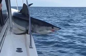 Balıkçı teknesine sıkışan köpekbalığının korku dolu anları