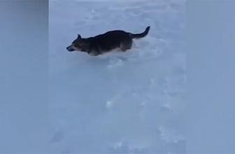 Dondurucu soğukta taş kesilen hayvanlar