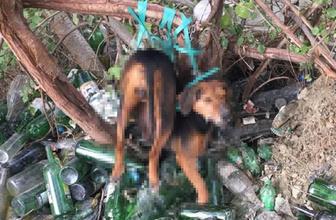 Akıl almaz iddia: Ağaca bağladıkları köpeğe tecavüz ettiler!