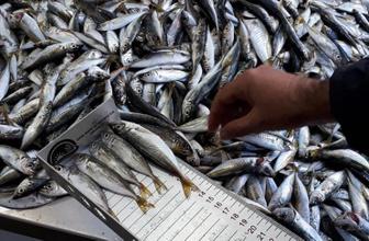 Tonlarca balığa el konuldu Balıkçılar yasak dinlemedi