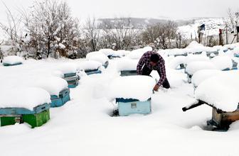 Kafkas arıları kar yağışıyla 'mesailerini' tamamladı