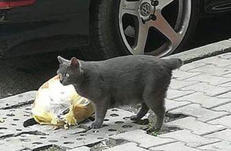 Sultangazi'de kedilere yönelik vahşet büyü yapmak için kuyruklarını kesiyorlar