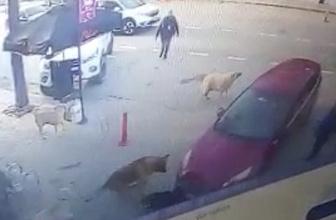 Sürücü köpeği gezdi kurtaran ise köpekler oldu