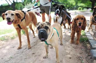 Gündüzleri köpek gezdirmek artık yasak