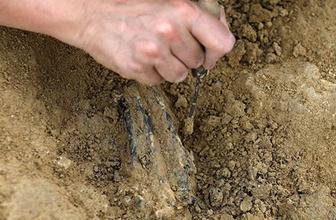 Kenya'da yaşamış en küçük maymun fosili bulundu