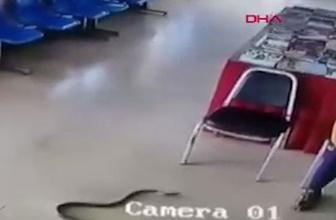 Polis merkezinde yılan saldırısı