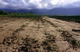 David Attenborough: Bir felaketle karşı karşıyayız!