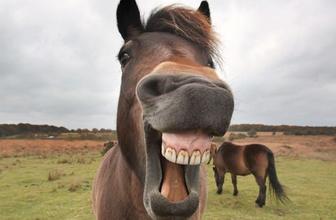 At ve eşeklere kimlik kartı geldi! Nereden nasıl alınacak?
