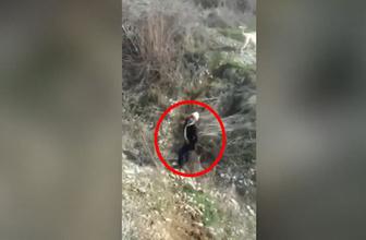 Kayseri'de köpeğe tecavüz görüntüleri! Yeni kayıt şok etti