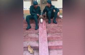 Yavru köpeklerin kayma keyfi izleyenleri gülümsetti