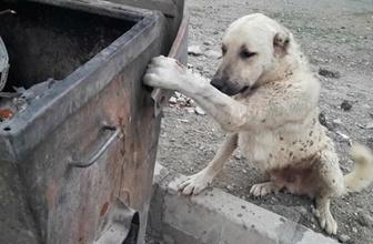 Çöp kutusuna patisi sıkıştı itfaiye yardımına koştu