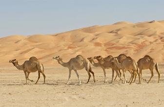 Suudi Arabistan'da 85 bin yıllık insan keşfi