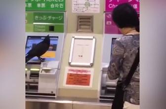 Çaldığı kredi kartıyla bilet almaya çalışan karga sosyal medyayı salladı