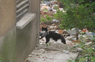 Sıkıştığı yerden kurtulan güvercini kedi kaptı!