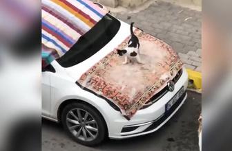 İstanbul doluya hazırlandı, kediler tadını çıkardı!