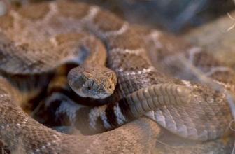 ABD'de yılanın kopuk kafası adamı ısırdı