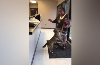Kaybolduktan 2 hafta sonra sahibini bulan köpek böyle sevindi