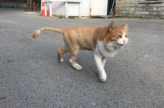 Adnan Oktar'ın kedisine şok! Sokakta kaldı