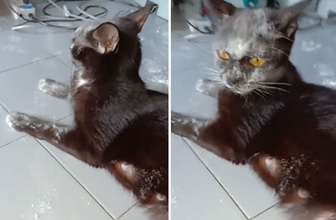 Meraklı kedi sahibine bu şekilde yakalandı