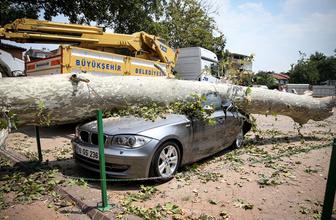 Bursa'da tarihi çınar lüks otomobilin üzerine devrildi